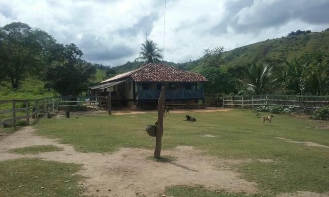 250 hectares terra pronta - Foto 5