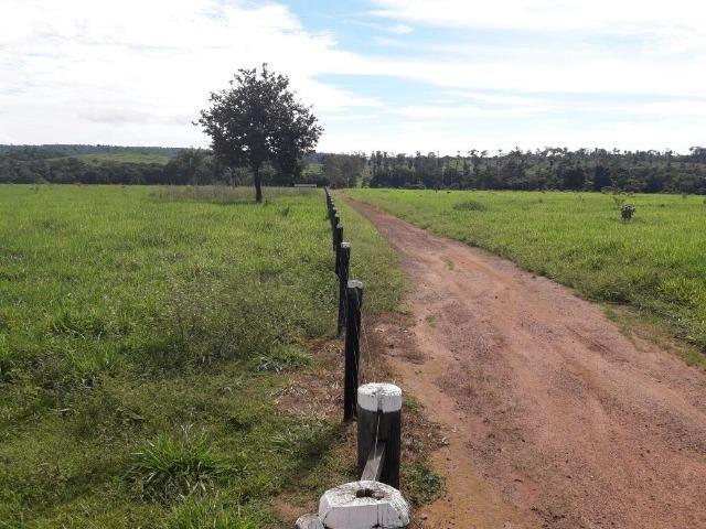 Fazenda de 261 alqueires, com 250 aberto 30 km de Nova Santa Helena -MT - Foto 2