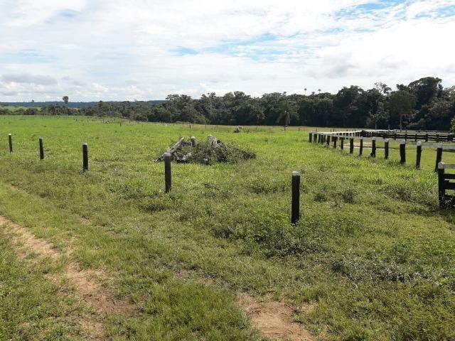 Fazenda de 261 alqueires, com 250 aberto 30 km de Nova Santa Helena -MT - Foto 10