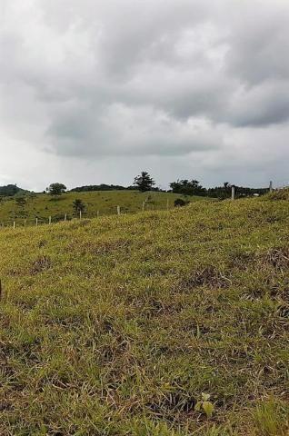 Fazenda 534 has em Tancredo Neves - Foto 14