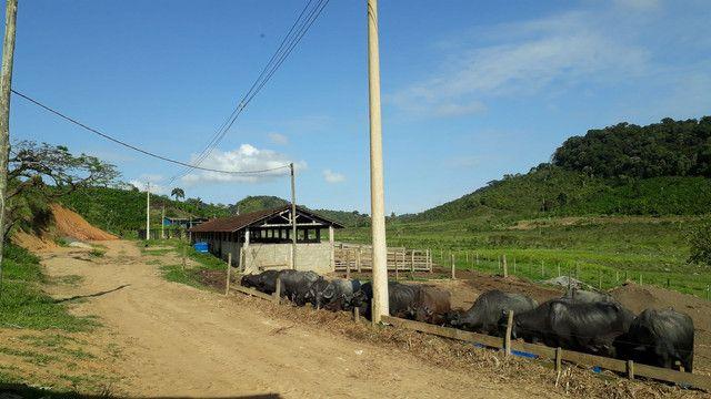 Fazenda 444 Hectares, Pastagem, Produção de Palmito Pupunha (Willian Ricardo) - Foto 10