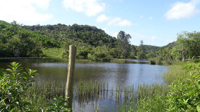 Fazenda 444 Hectares, Pastagem, Produção de Palmito Pupunha (Willian Ricardo) - Foto 4