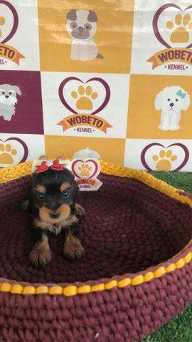 Yorkshire Terrier Kennel Wobeto - Foto 3