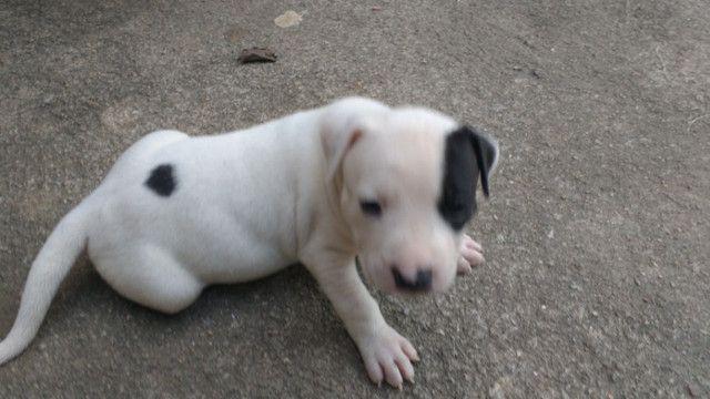 Cachorros - Foto 4