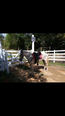 Cavalo marchador batida