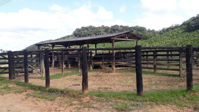 Fazenda 444 Hectares, Pastagem, Produção de Palmito Pupunha (Willian Ricardo) - Foto 7