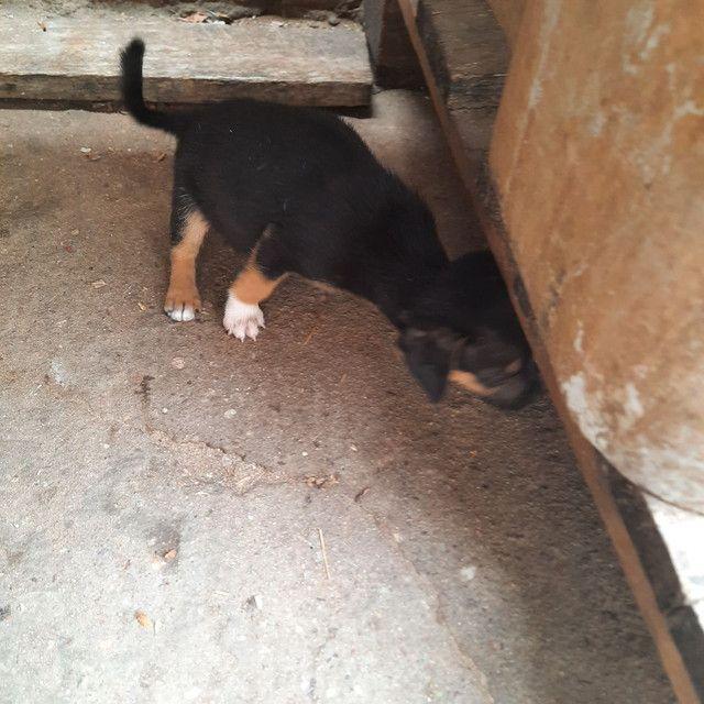 Cachorrinho  - Foto 2