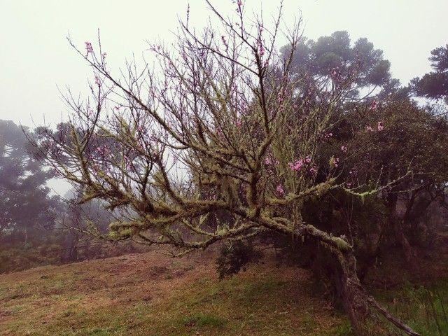 Sitio em Urubici, fazenda em Urubici, serra catarinense. - Foto 5