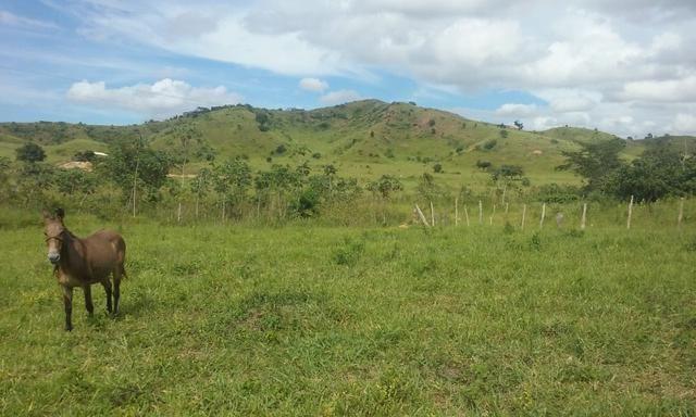 250 hectares terra pronta - Foto 14