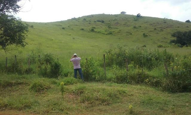 250 hectares terra pronta - Foto 13