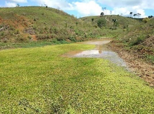 Fazenda Potiraguá/BA 678 hectares - Foto 8