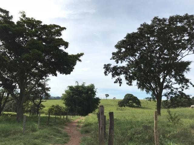 Fazenda 37,3 Alqueires ( 180,85 ha )- Nova Fátima-GO\Hidrolândia-GO - Foto 12