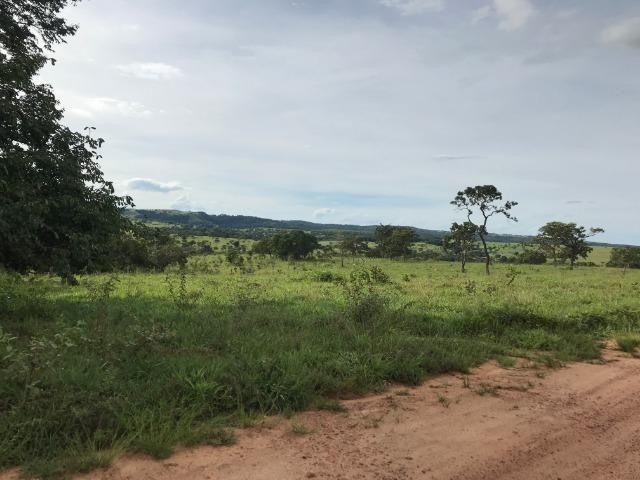 Fazenda 37,3 Alqueires ( 180,85 ha )- Nova Fátima-GO\Hidrolândia-GO - Foto 3