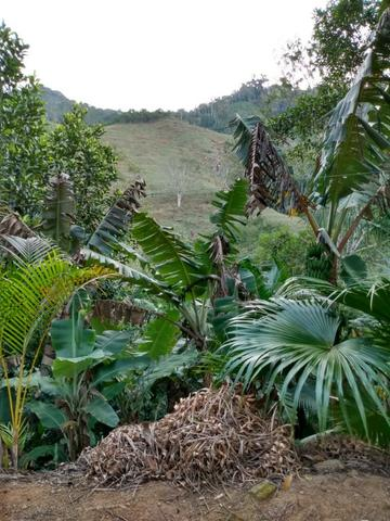 Terreno com 8 alqueires=19 hectares - Foto 2