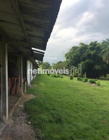 Sítio à venda com 4 dormitórios em Jauá, Camaçari cod:776377 - Foto 4