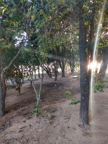 Rancho vo João em Pres Epitácio com piscina - Foto 17