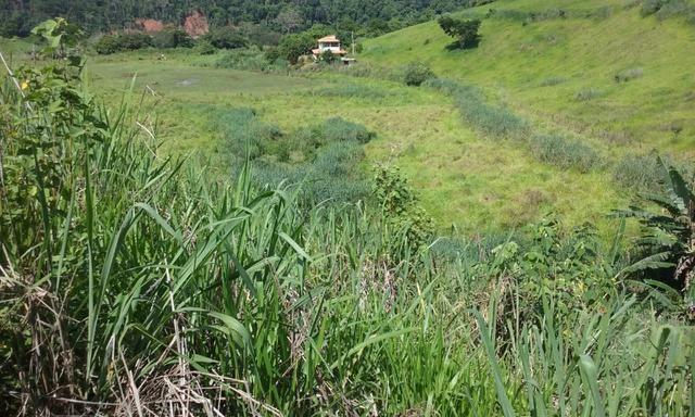 36 hectares na região pingo dagua - Foto 4