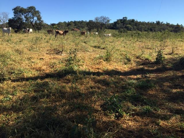Fazenda c/ 570he, c/ 90% aberto/juquirado, 8km de Itiquira-MT, entrada + 4 parcelas - Foto 10