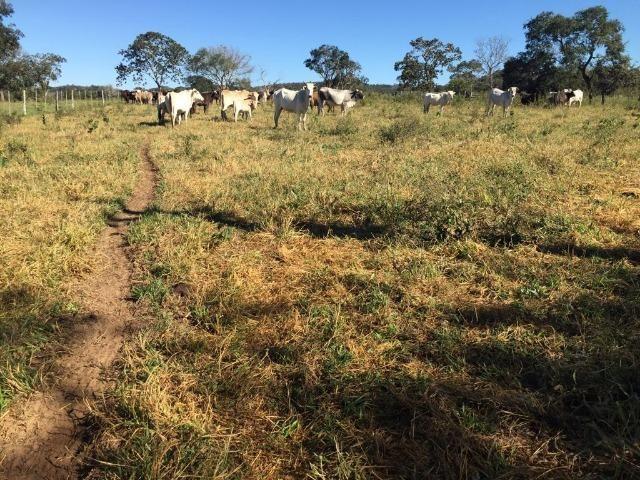 Fazenda c/ 570he, c/ 90% aberto/juquirado, 8km de Itiquira-MT, entrada + 4 parcelas - Foto 14