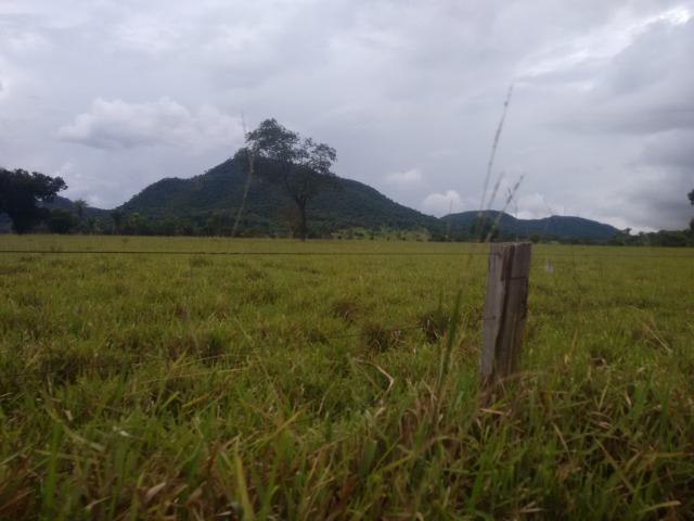 Fazenda 570 Hectares Grande Oportunidade - MT - Foto 3