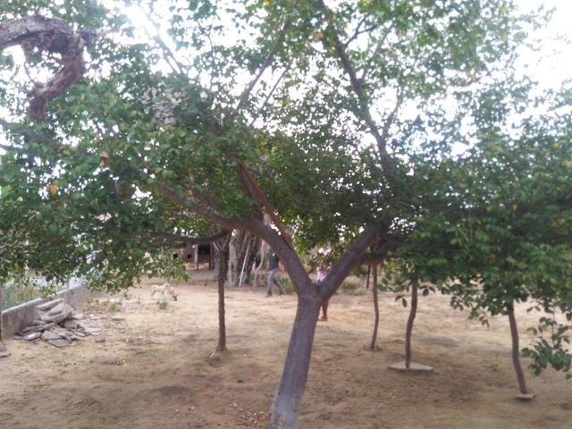 Chácara.sítio .a venda - Foto 15