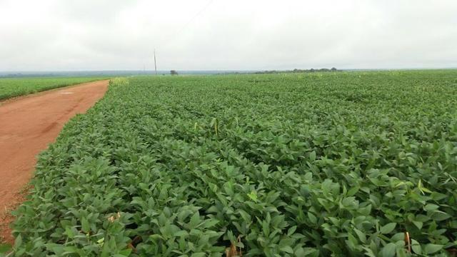 Fazenda 710 Hectares Plantando Lavoura - Ipiranga do Norte - MT
