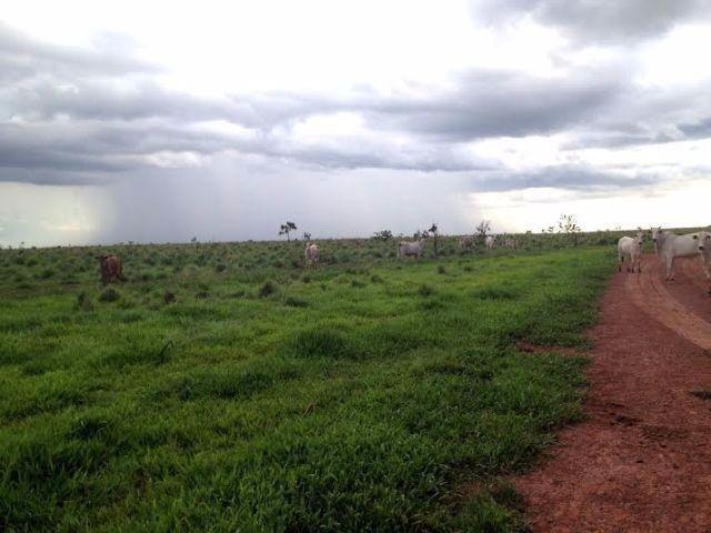 Fazenda c/ 1.700he c/ 80% formados, dupla aptidão, Itiquira-MT, pego 50% em imóvel no PR - Foto 13