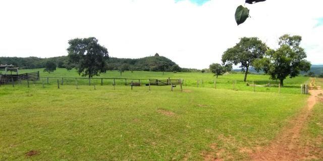 Fazenda com 686he, c/ 350He formado, terra boa, 30km antes Guiratinga-MT - Foto 7