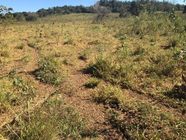 Fazenda c/ 570he, c/ 90% aberto/juquirado, 8km de Itiquira-MT, entrada + 4 parcelas - Foto 3