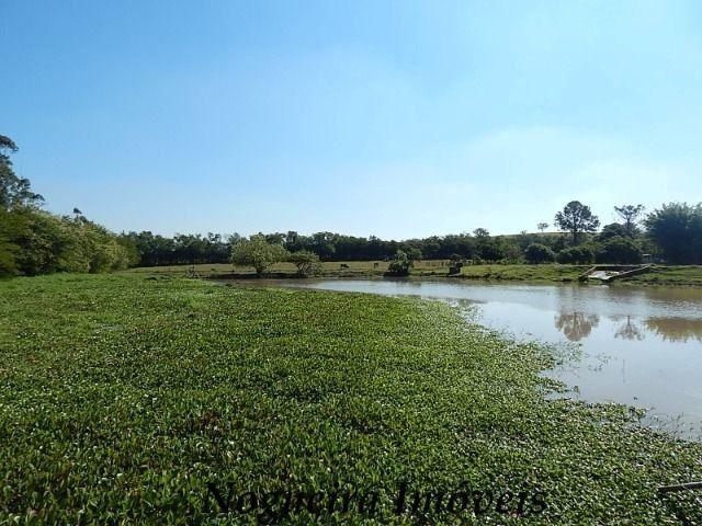 Sítio com 4 lagos, excelente para pesqueiro (Nogueira Imóveis Rurais) - Foto 14