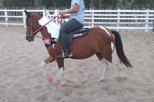 Vendo Égua Paint Horse - Foto 5