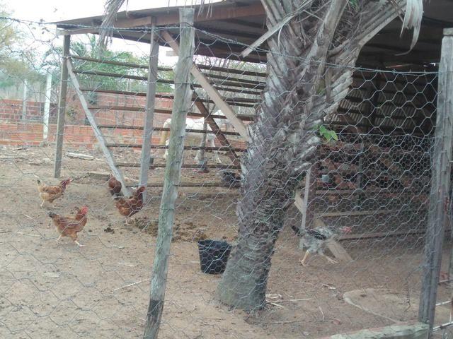 Chácara.sítio .a venda - Foto 18