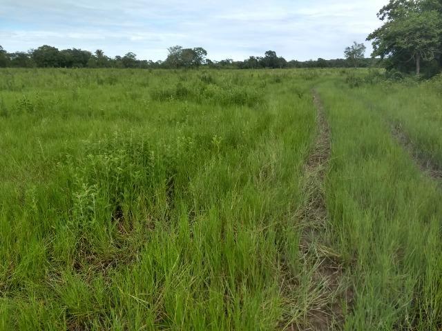 Fazenda com 200he, c/ 50% formado, terra de cultura, 40km de Cuiabá-MT - Foto 14