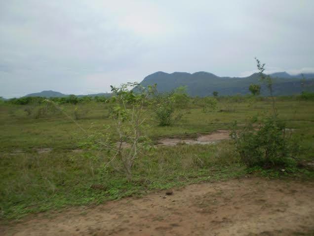 Fazenda c/ 7.615he c/ 4.200he formados, as margens da BR, Caceres-MT - Foto 5