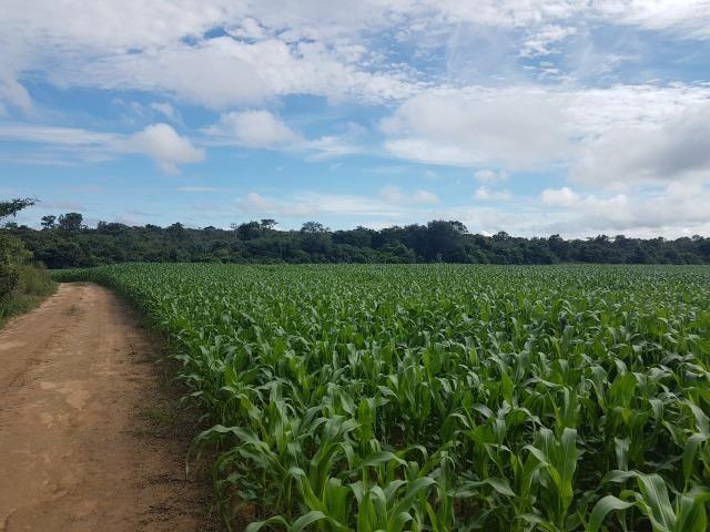 Fazenda 6.400 Hectares Plantando Lavoura - MT - Foto 5