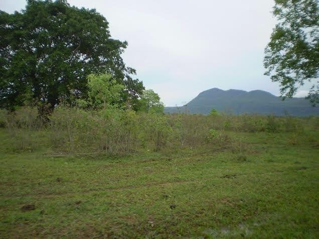 Fazenda c/ 7.615he c/ 4.200he formados, as margens da BR, Caceres-MT - Foto 3