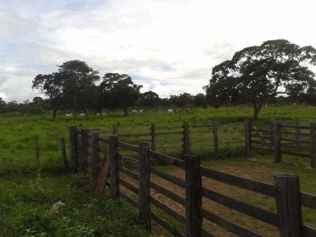 Fazenda c/ 840he c/ aprox. 400he formado, c/ GEO, Guiratinga-MT - Foto 8
