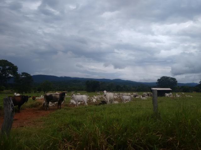 Fazenda 570 Hectares Grande Oportunidade - MT - Foto 10