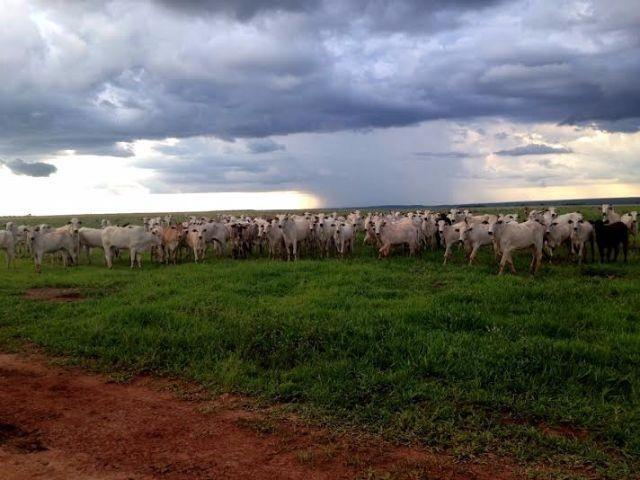 Fazenda c/ 1.700he c/ 80% formados, dupla aptidão, Itiquira-MT, pego 50% em imóvel no PR - Foto 12