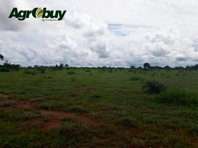 Fazenda Localizada em Alvorada - to - Foto 2