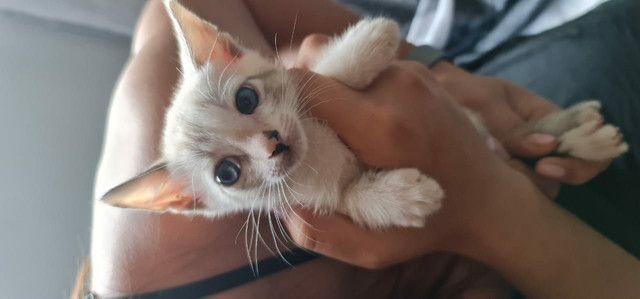 Filhote de gato - Foto 2