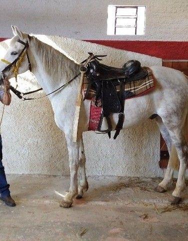 Vendo este cavalo , 3.900,00