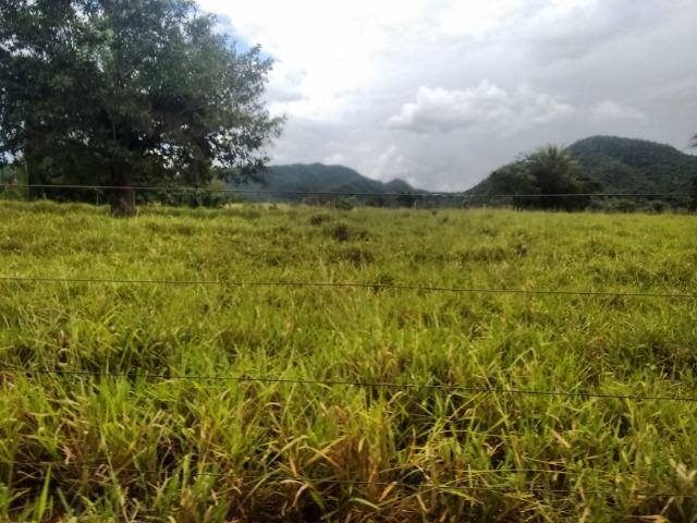Fazenda 570 Hectares Grande Oportunidade - MT - Foto 4