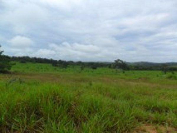 Fazenda c/ 840he c/ aprox. 400he formado, c/ GEO, Guiratinga-MT