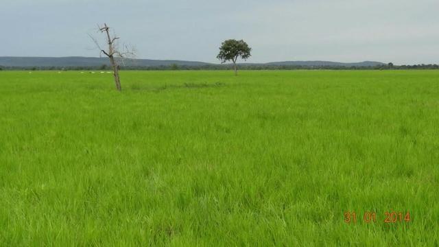Fazenda c/ 4.500he, C/ 80% aberto, parte faz lavoura, Nova Xavantina-MT - Foto 6
