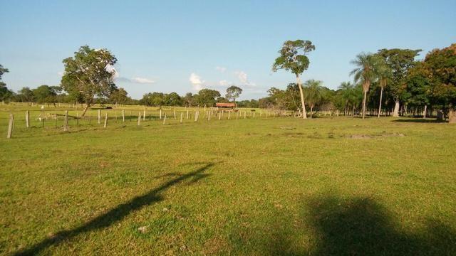 Fazenda 1.210 Hectares Excelente Pecuária - Cáceres - MT - Foto 11