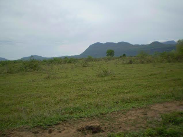 Fazenda c/ 7.615he c/ 4.200he formados, as margens da BR, Caceres-MT - Foto 2