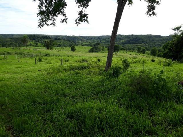 Fazenda c/ 912he, 550he formados, Terra boa, Itiquira-MT - Foto 19
