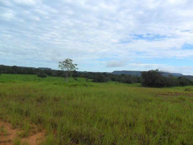 Fazenda c/ 840he c/ aprox. 400he formado, c/ GEO, Guiratinga-MT - Foto 4