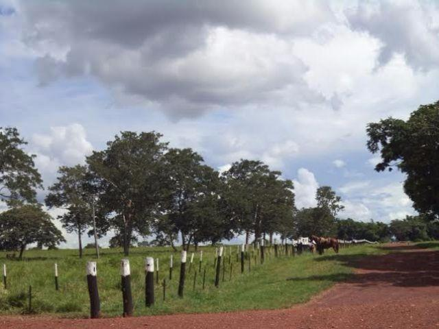 Fazenda c/ 3.480he c/ 80% formada, as margens da BR, Rondonópolis-MT - Foto 7